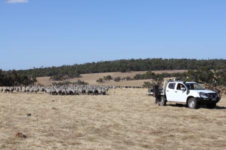 Taking soil samples from paddocks