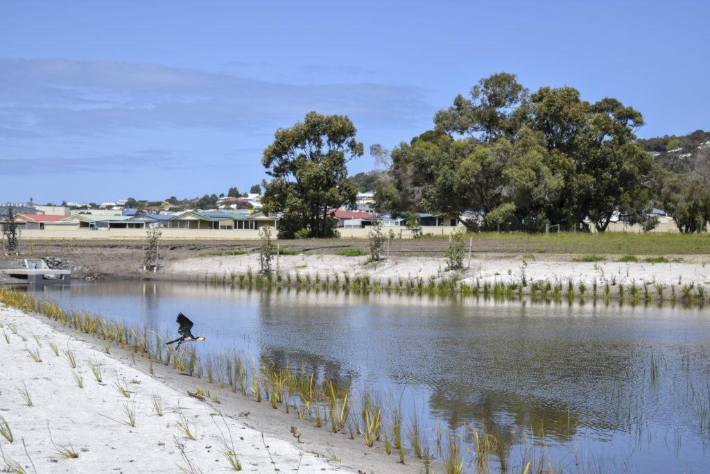 Centennial Park Wetland